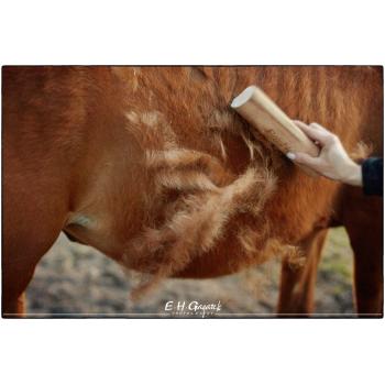 Szczotka Brashka Horse do usuwania liniejącej sierści